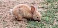 Lokrum bunny.jpg